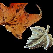 SALE BG8 TIFFANY & CO Vintage Sterling Silver Maple Leaf Brooch Pin