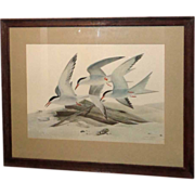 "REDUCED JOHN RUTHVEN (American b. 1924) - ""Common Terns""  Limited Edition, Signed/nu"