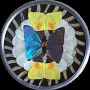 Vintage Brazilian Rain Forest Butterfly Wing Plate