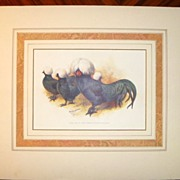 SALE PENDING Antique Chromolithograph from the POULTRY BOOK 1905