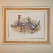SALE Antique Chromolithograph from the POULTRY BOOK 1905