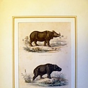 Antique French Hand Colored Engraving of a hippopotamus & Rhinoceros