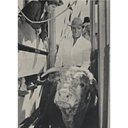 "Elvis Presley Rodeo Bull Riding Movie Still Vintage Photograph ""STAY AWAY JOE"" 1968"