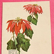 REDUCED Art Nouveau Christmas Post Card Series No. 169 Wilting Poinsettia