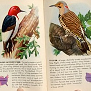 SOLD 1949 A Guide To The Most Familiar American Birds