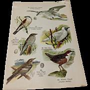 Vintage 1909 Lithograph Page
