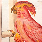SALE Hand Colored Copperplate Engraving Parrot Cockatoo 19. Century