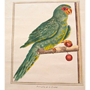 SALE Superb Hand Colored Etching Parakeet 19. Century