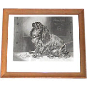 "Framed Etching ""The Pet of the Duchess""  Cocker Spaniel"