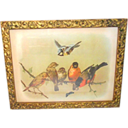 Victorian Gilt Frame With Six Birds and a Butterfly on a Tree Branch