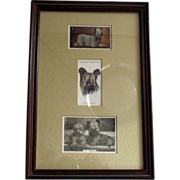 Skye Terriers Victorian Tobacco Trade Cards Beautifully Framed