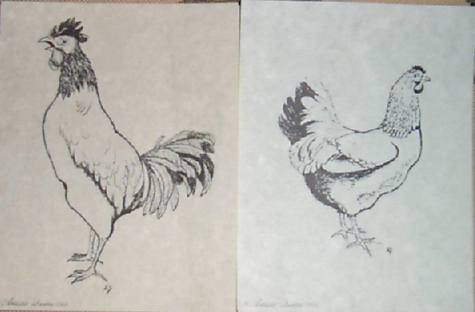 Pen And Ink Drawing Chicken Rooster Art Black And White