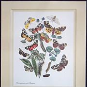 Butterfly Vintage Barenspinner mit Raupen Print