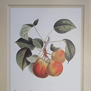 Botanical Fruit Lithograph