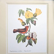 Bird Print Botanical