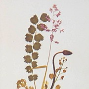 Wildflower Botanical Thistle Flower Print-Lithograph