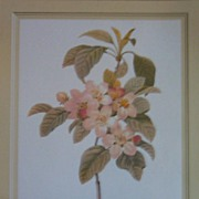 Botanical Peach Blossoms Lithograph