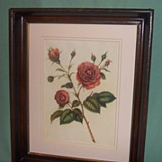 Botantical Floral Rose Lithograph Framed in Mahagony