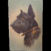 SALE PENDING Postally unused Scotch Terrier Postcard