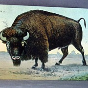 1911 Buffalo New York Post Card