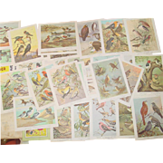 Bird Watching Portraits in Color 30 Print Set Audubon Book General Mills Art Promo