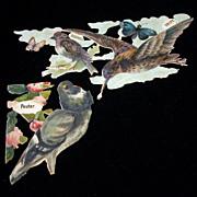 Victorian Die Cuts of Birds, Embossed, Pouter Pidgeon, Snipe, Etc.
