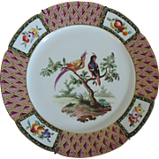 Antique 18th century Derby Porcelain Ornithological Cabinet Plate Decorated with Exotic Birds