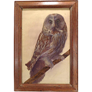 Antique 19th century American Watercolor Painting of a Barn Owl