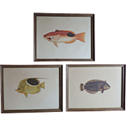Group Three Framed 19th century Natural History Fish Prints by Cuvier & Valenciennes with Vand