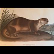 Antique 19th century Audubon Large Folio Hand Colored Lithograph Canada Otter Philadelphia 184