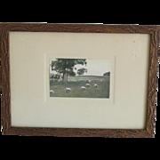 Hand Tinted Pastoral Sheep Photograph Vintage Original Frame