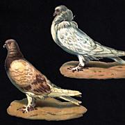 SALE PENDING Pigeon-Doves-Bird Die-cut Vintage Unused Lithographs
