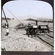 c1900 Sacramento Valley California Real Photo Vintage Stereo Views (7) - 1900 Grain Harvesting
