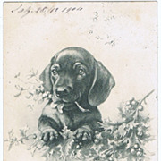 Vintage Postcard with Dachshund 1904