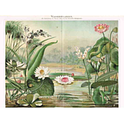 SOLD Water Plants. Chromolithograph 1898