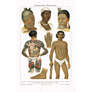 Tattoos: Decorative Chromo Lithograph showing tattooed Bodies, 1900