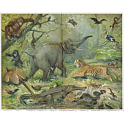 SOLD Oriental Fauna: Antique Lithograph. Very decorative.