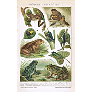 Frogs and Toads. Very decorative old Chromolithograph, 1900