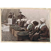 SOLD Tea Pickers in Japan. Tinted Albumen Photo. 1880s