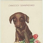 Vintage Kitsch Postcard with Dachshund