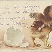 Funny Easter Postcard. Poland to Austria. 1900