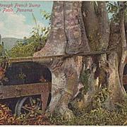 Tree Grown Through Car. Funny Vintage Postcard.