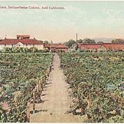 California: Italian-Swiss Wine cellars at Asti. Old Postcard