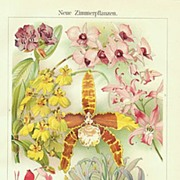 SOLD New Houseplants: Antique Chromo Lithograph.