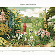 SOLD Garden Pants: Chromo Lithograph from 1902