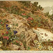 1898: Flowers from Alpine Region. Chromolithograph