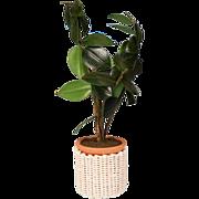 "Dollhouse Miniature Rubber Tree Houseplant in White Wicker Basket Early 1990s 1"" Scale"