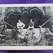 Original Photo of Lumberjacks Chopping Down Ancient Redwood Eureka,Ca.