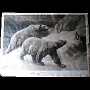 "Signed ""Herbert Dicksee (1862-1942)"" Etching of Polar Bears"