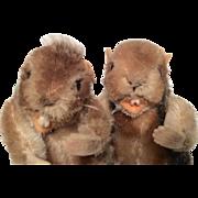 2 Vintage Steiff Beaver